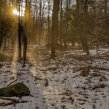 Chris Bordeleau - Forest dreams