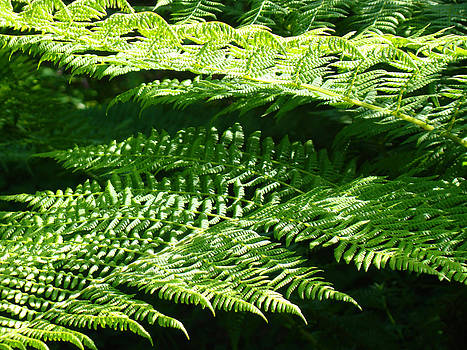 Baslee Troutman - Forest Ferns Art Prints Green Fern Nature