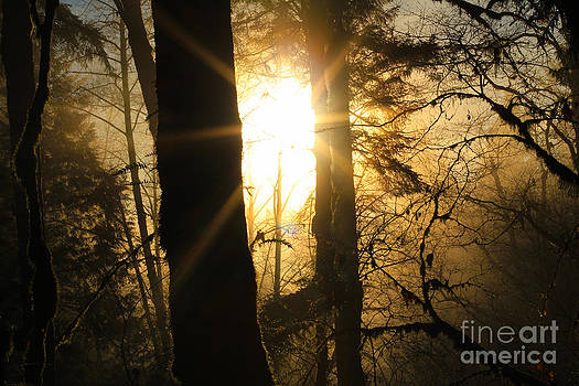 Forest Flare  by Jason Gallant