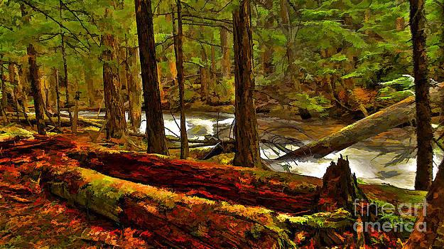 Forest Floor by Sam Rosen