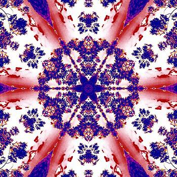 Forest Fractals by Derek Gedney