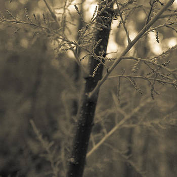 Forest by Gianfranco Evangelista