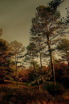 Nina Fosdick - Forest glade