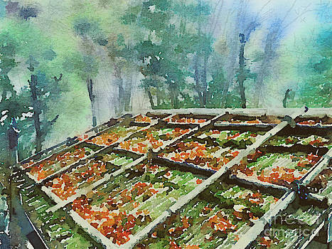 Beverly Claire Kaiya - Forest Hut Roof with Moss and Fallen Autumn Leaves