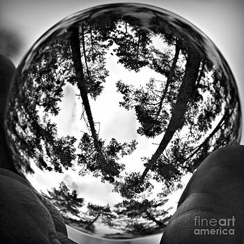Forest In A Crystalball by Ste Flei
