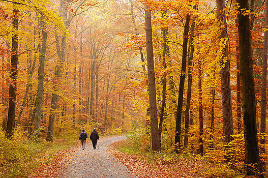 Forest in fall - trees with beautiful autumn colors by Matthias Hauser