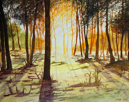 Forest in sunset by Lior Ohayon