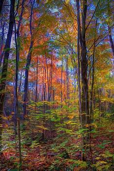 Forest in the Fall by Anthony Seebaran