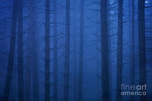 Sean Bagshaw - Forest In The Fog