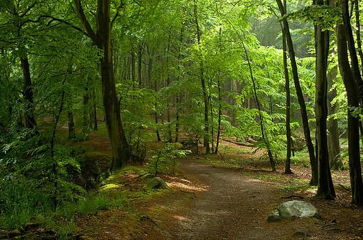 Iryna Soltyska - Forest
