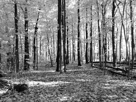 Forest by Karolina Olszewska
