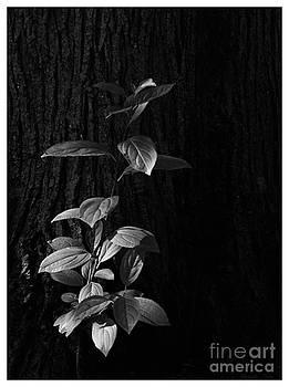 Frank J Casella - Forest Light
