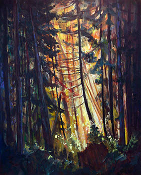 Forest Light by Nanci Cook