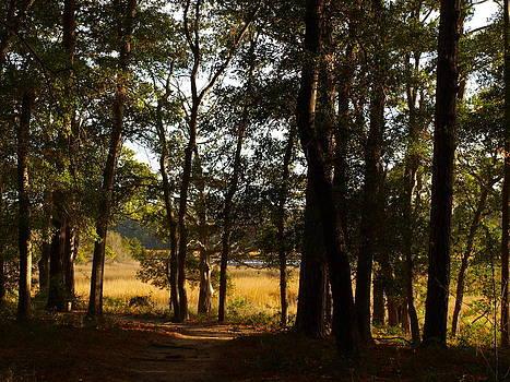 Forest Marsh Light by Kathleen Palermo