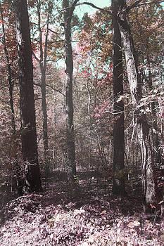 Nina Fosdick - Forest Memories