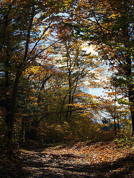 Forest path by Kelly E Schultz