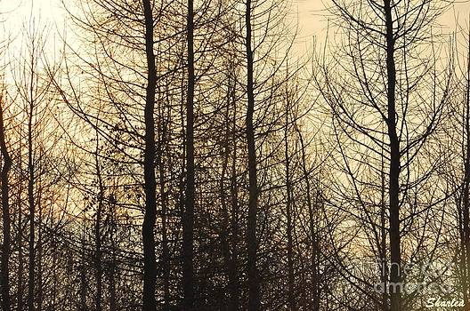 Forest  by Paula Sharlea