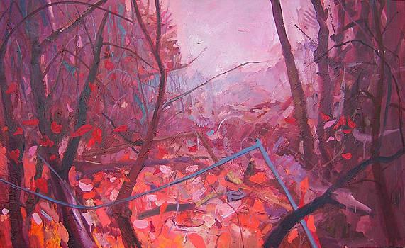 Forest red by Arturas Braziunas
