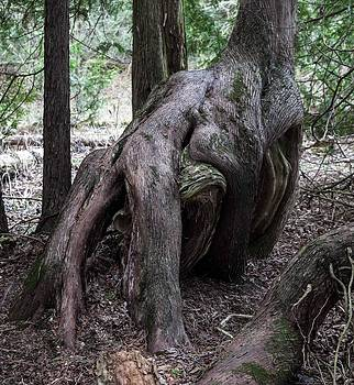 Forest roots wrestling by Blago Simeonov