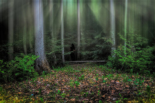 Forest Secrets by Gary Smith