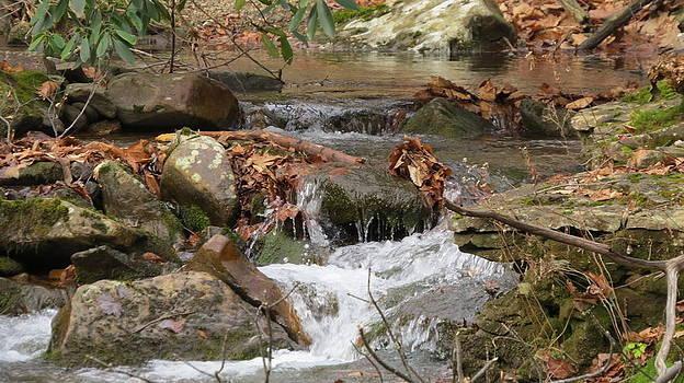 Forest Stream by Diane Mitchell