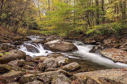Forest Stream by Maria Aiello