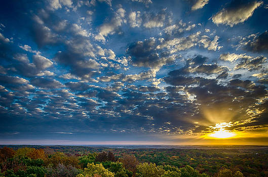 Forest Sunrise by Todd Heckert
