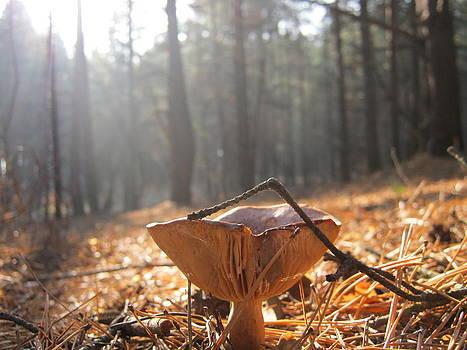 Forest by Tatyana Primak