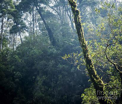 Tim Hester - Forest
