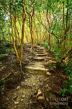 Jamie Pham - Forest Trail Glow - Pipiwai Trail in Maui.