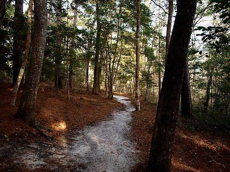 Forest Trail - Vereen Gardens by Kathleen Palermo