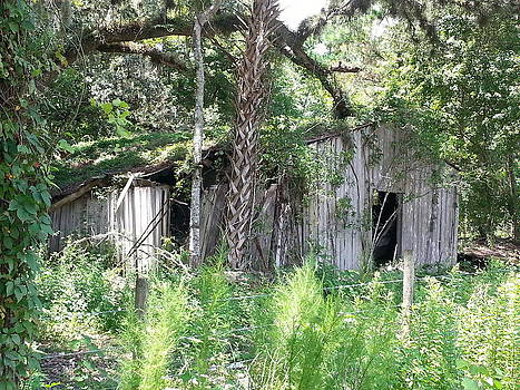 Forgotten Barn by Fortunate Findings Shirley Dickerson