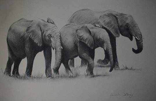 Forgotten giants  by Lucinda Coldrey