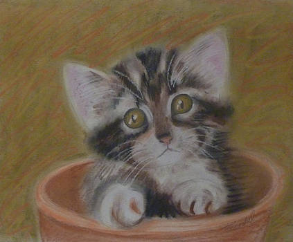 Forlorn Kitten by Patricia Frankel
