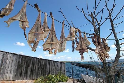 Nano Calvo - Formenteras Dried Fish - Peix Sec De