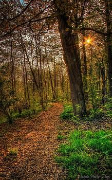 Forrest by Michaela Preston
