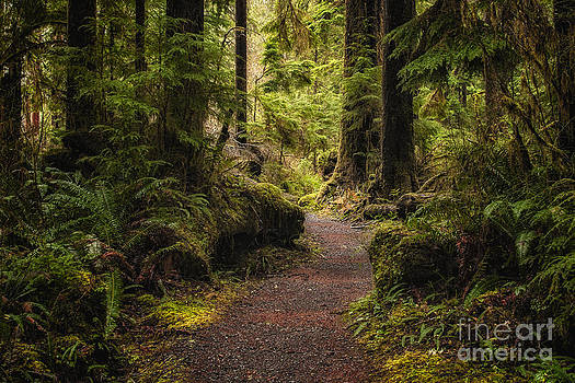 Forest Walk  by Jennifer Magallon