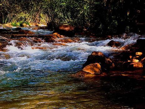 Fossil Creek Arizona by Wayne  Ligon