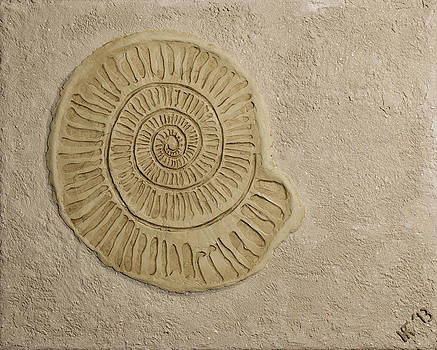 Fossilized Nautilus by Katie Fitzgerald