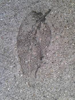 Fossill I by Iamthebetty Tbone