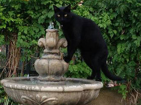 Fountain Cat by Alison Stein