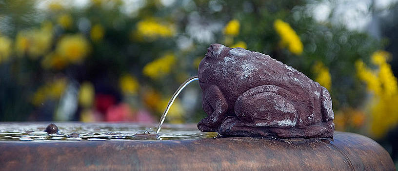 Fountain Frog  by Sandy Scharmer