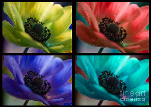 Four Beauties by Nicole Markmann Nelson