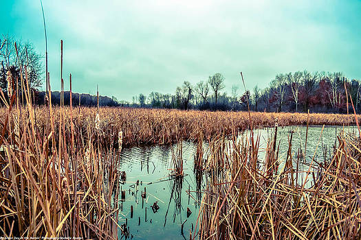 Four Corners Wetlands by Michelle Ressler