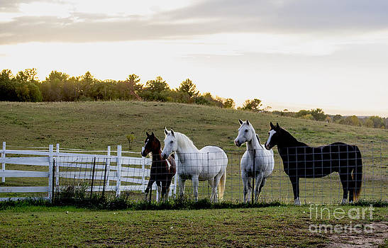 Four Horses by TommyJohn PhotoImagery LLC