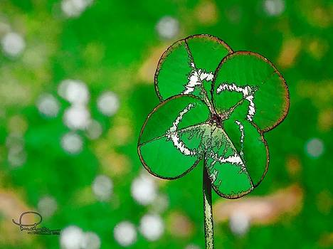 Four Leaf Clover by Ludwig Keck