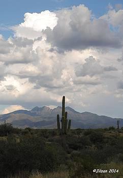 Four Peaks Saguaro by Jill Baum
