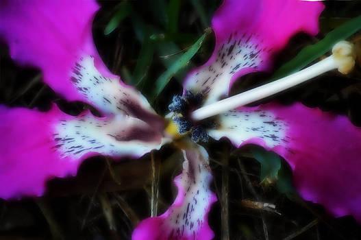 Four Petals by Tara Miller