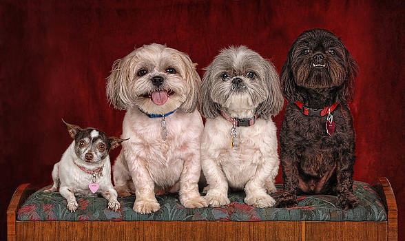 Four Sitting Dogs by Perry Harmon