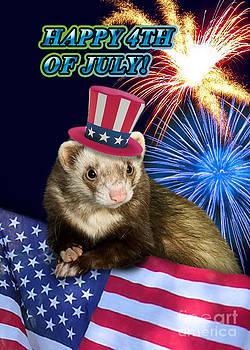 Jeanette K - Fourth of July Ferret